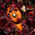 Chop up your pumpkin before adding it to your compost pile.