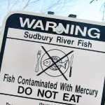 One of the ways humans consume heavy metals is by eating fish that lived in polluted waters. Photo credit: Photo: Redjar/Flickr