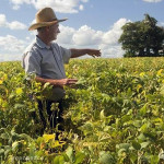 Small scale organic farmer inspecting a soya field in Parana. Photo credit: Greenpeace