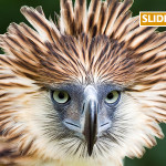 birdFI
