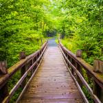 Shenandoah National Park. Photo courtesy of Shutterstock