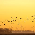 birdwind