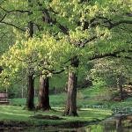 Copyright 2002 The Holden Arboretum.