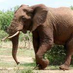 elephantFI